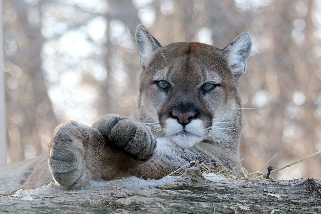 Veľká korisť pekná mačička